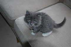 Our kitty lookings small